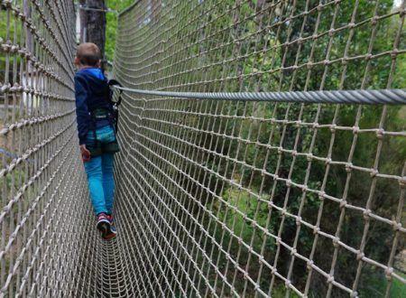 Tree climbing - Indy Pitchoun course